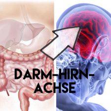 Darm-Hirn-Achse - Hörst du auf deinen Bauch?