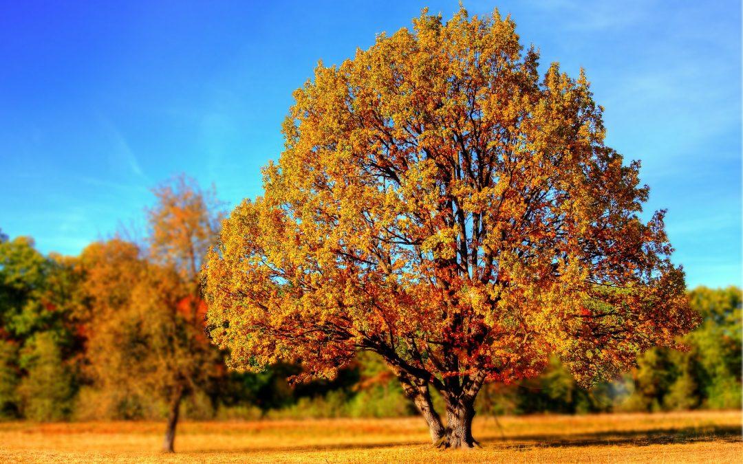 Vital durch den Herbst – 8 wertvolle Tipps für mehr Bewegung und Fitness
