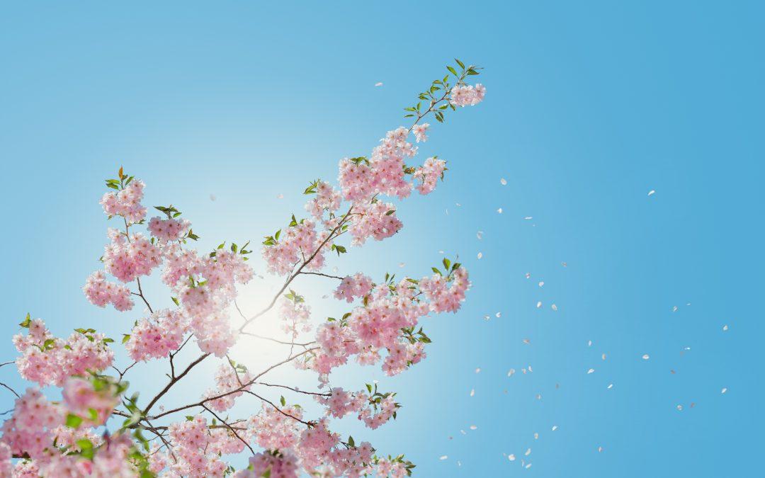 Der Frühling kommt – trotzdem